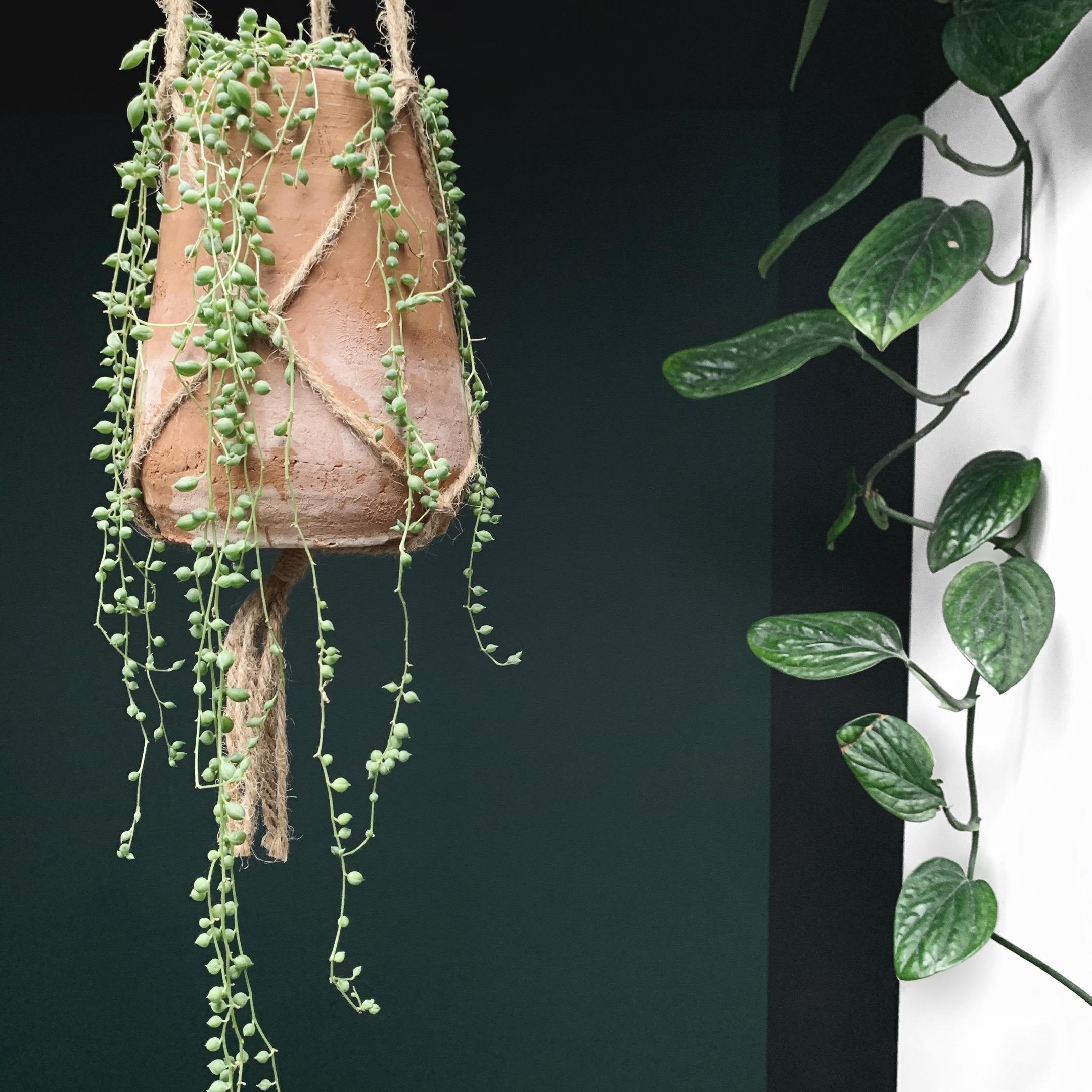 plant, planten, groen, huis, interieur, stijl, styling, meer groen, pot, binnenplant, gezellig